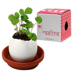 Eggshell Potted Plants